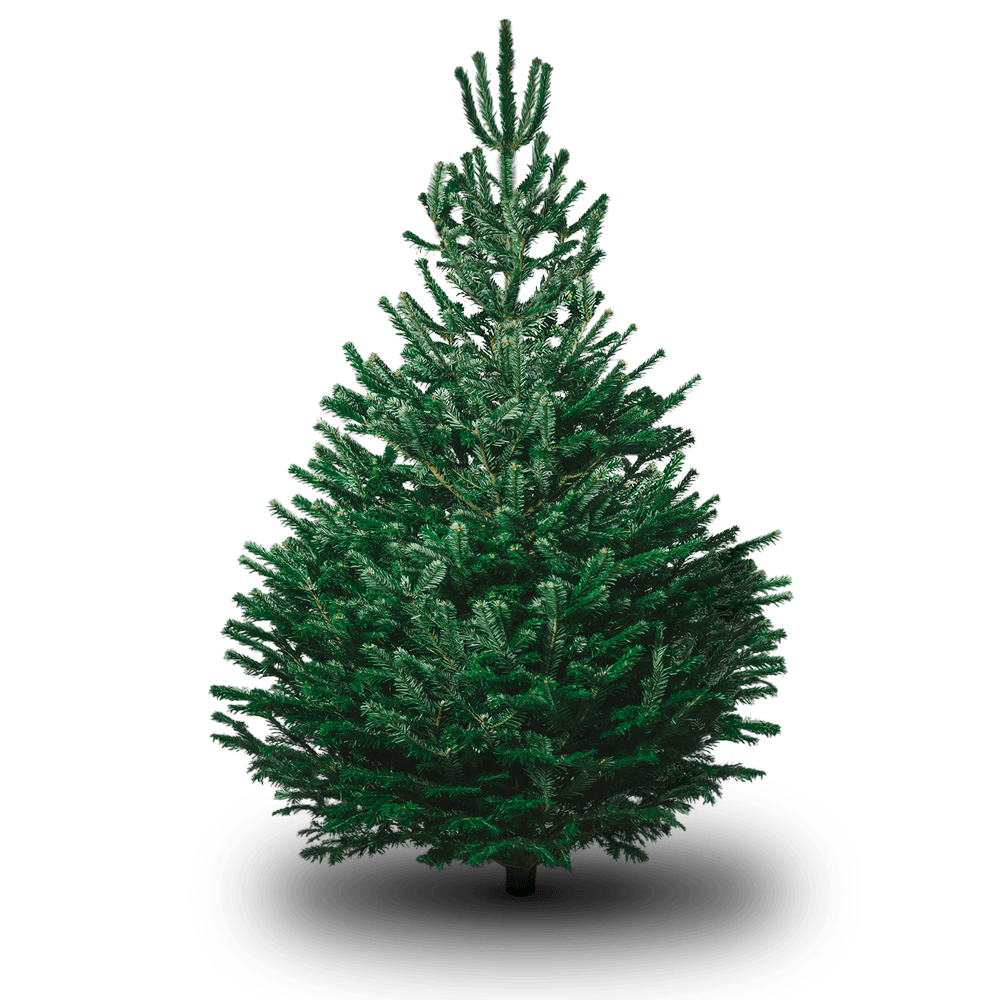 Christmas Tree Types.Christmas Tree Types How To Choose Creekside Christmas